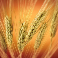 Зерно, семечки и продукты из них (каши, макароны, мука)